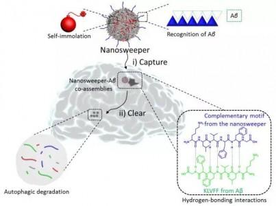 """国家纳米科学中心王浩研究员课题组:""""智能""""生物纳米材料研究取得进展"""