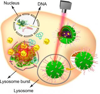 国家纳米中心在CRISPR纳米递送研究中取得新进展