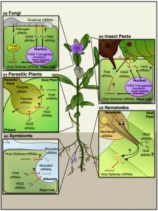 Science: 小RNA通过外泌体跨界传输——植物与病原体的军备竞赛
