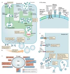 Nature子刊综述:癌症中的细胞外囊泡——对未来癌症治疗改善的启示