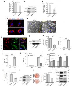 Nature子刊:外泌体及其miRNAs的分泌受Tet1和Tet2调控并参与间充质干细胞稳态维持