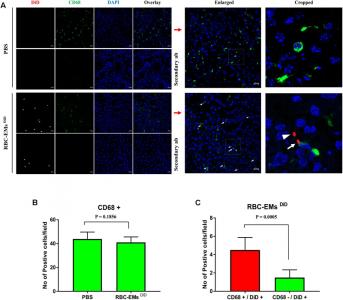 利用放射同位素标记的红细胞来源的外泌体模拟物进行体内非侵入性成像