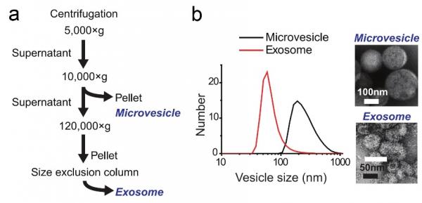 细胞外囊泡与母体细胞在蛋白层面的功能相似性研究【Small】