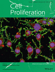 海军军医大学许硕贵、方硕课题组:人脐带间充质干细胞分泌的外泌体通过HIF-1α介导的血管生成促进大鼠骨折愈合