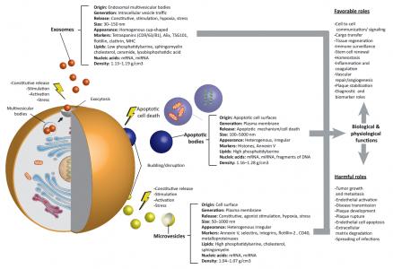 细胞外微泡——疾病治疗研发新前沿