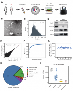 Clin Chem | 复旦大学研究团队揭示了人类血浆中细胞外囊泡长链RNA组分特征及其潜在应用