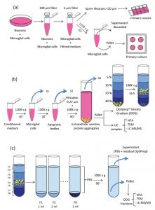 胞外囊泡蛋白质组学表征——普通超速离心和密度梯度超速离心之间的比较