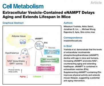 Cell子刊揭示年轻脂肪组织胞外囊泡抗衰老并延长寿命的作用机制