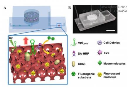 东南大学研究人员开发了一种名为ExoIDchip的微流体芯片,用于细胞外囊泡的有效分离和灵敏定量