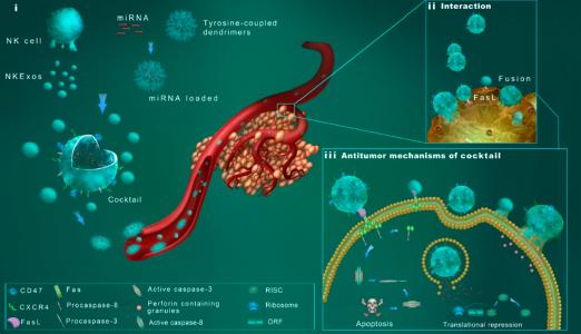 浙江大学医学院:NK细胞外泌体及仿生纳米颗粒联合的鸡尾酒疗法用于肿瘤治疗
