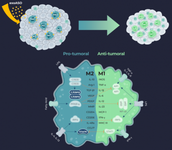 Codiak公布exoASO的首个临床前数据——靶向肿瘤相关巨噬细胞的工程化外泌体
