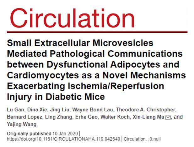 Circulation:糖尿病通过脂肪细胞sEV的miR-130b-3p加剧心脏缺血/再灌注损伤
