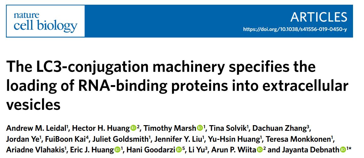 NCB:LC3介导RNA结合蛋白及相关RNA分选进EVs中的机制