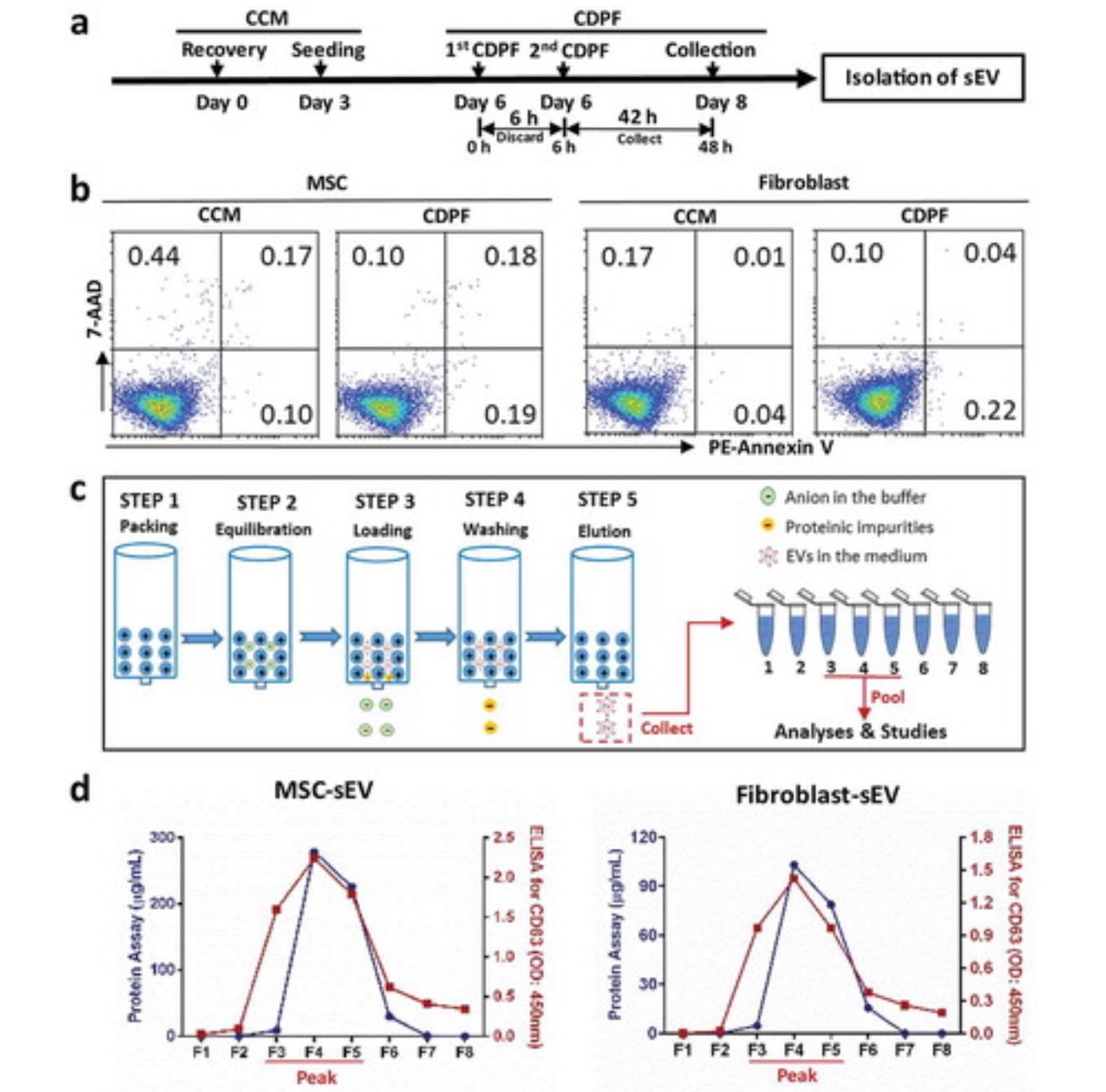 中山大学:人间充质干细胞分泌的小细胞外囊泡减轻2型先天性淋巴细胞相关的过敏性气道炎症