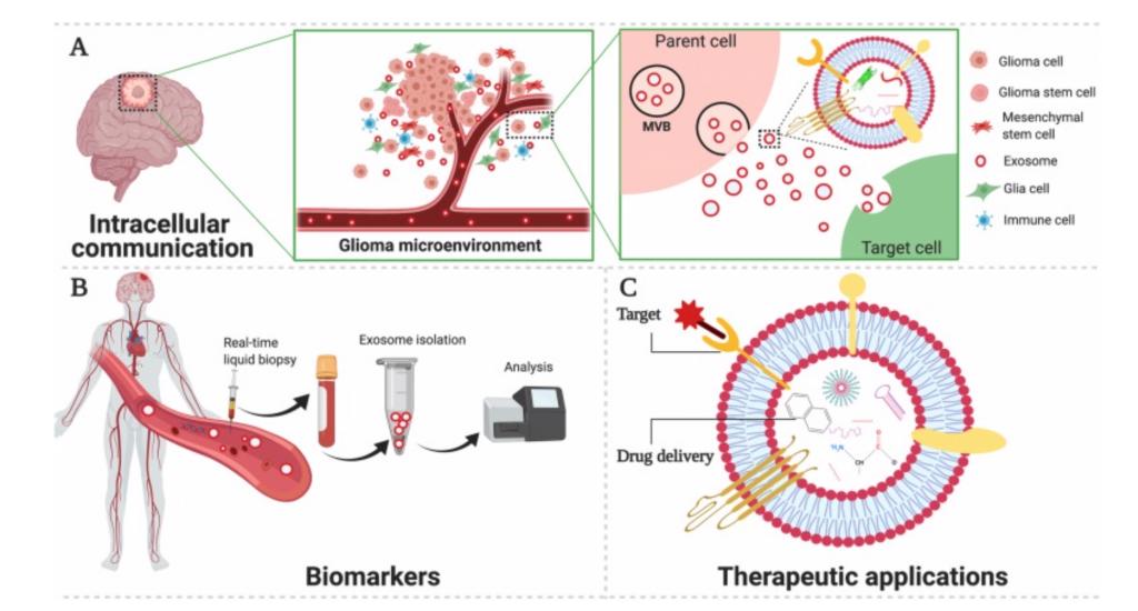 【综述】四川大学华西医院:脑胶质瘤外泌体中的非编码RNA的生物学功能和临床应用