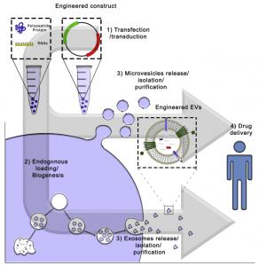 【综述】细胞外囊泡作为药物递送系统:Why and How?
