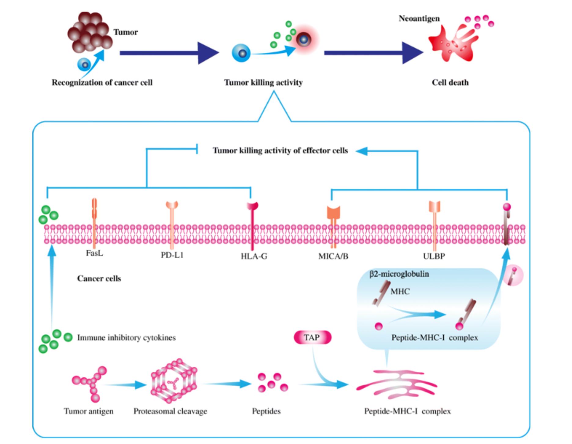 华中科技大学综述:肿瘤miRNA通过外泌体等多种途径帮助肿瘤免疫逃逸