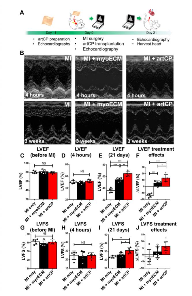 Science子刊:利用细胞分泌物制成现成的人工心脏贴片促进大鼠和猪心肌梗死后的心脏修复