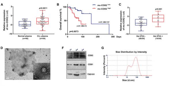 南京医科大学:线粒体基因组来源的circRNA mc-COX2作为癌基因促进慢性淋巴细胞白血病进展