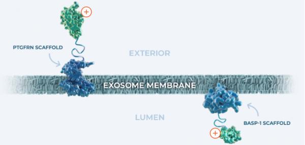 Codiak公布新的临床前数据——engEx™工程外泌体驱动新型分子药物的潜力