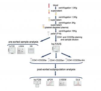 JEV:高灵敏度荧光激活分选证实血浆EV核酸库的异质性