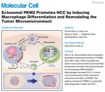 厦门大学:微囊泡PKM2通过诱导巨噬细胞分化和重塑肿瘤微环境促进肝癌进展