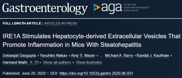 NASH发病新机制!IRE1A刺激肝细胞EVs,促进脂肪性肝炎小鼠的炎症|Gastroenterology