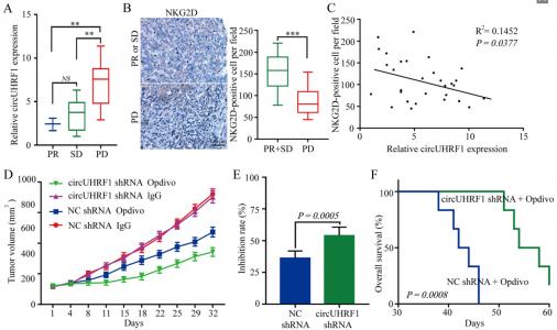 复旦中山医院:肝癌外泌体circRNA诱导NK细胞衰竭,导致对anti-PD-1疗法的耐药