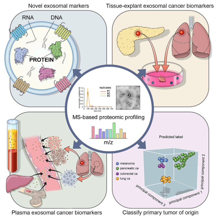 【Cell】重磅:大规模蛋白质组学揭示多种癌症细胞外囊泡标志物,助力癌症液体活检