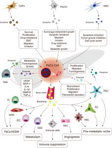 【综述】中国医科大学:外泌体在胰腺癌起始和转移中的作用