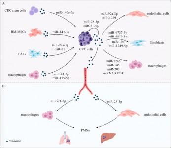 【综述】四川大学华西医院:结直肠癌外泌体中的非编码RNA的功能