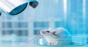 研究人员利用细胞外囊泡作为免疫疗法治疗多发性硬化症