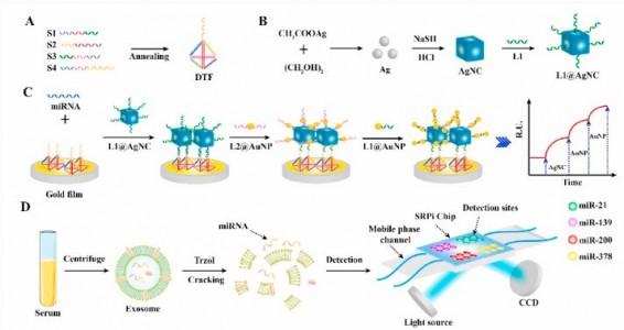 重庆医科大学:基于表面等离振子共振成像的生物传感器对NSCLC相关的外泌体miRNA进行检测