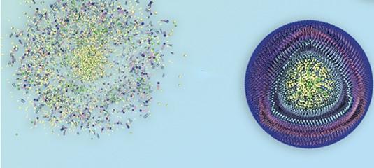 科学家开发了新型纳米颗粒包装钙和柠檬酸并靶向胸膜肿瘤