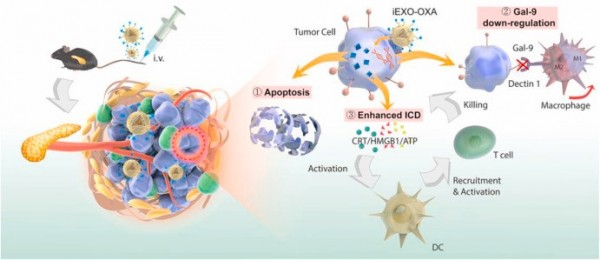复旦大学药学院:外泌体用于增强免疫治疗并重编程肿瘤微环境实现胰腺癌治疗