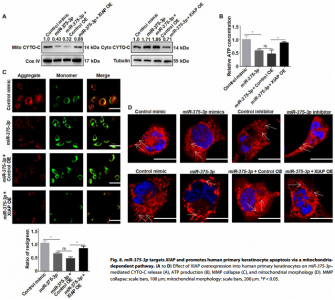 Science子刊:严重药物反应通过血浆外泌体miR-375-3p破坏皮肤