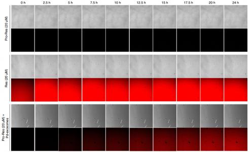Nature Protocols:无损生产负载有超薄钯纳米片的外泌体,用于靶向生物正交催化