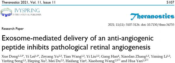 天津医科大学:外泌体介导的视网膜药物递送系统用于治疗视网膜血管新生