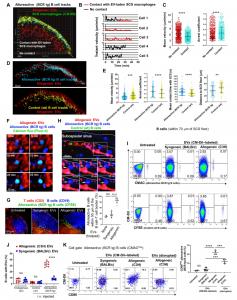 Science子刊:移植物的细胞外囊泡引发B细胞同种免疫反应