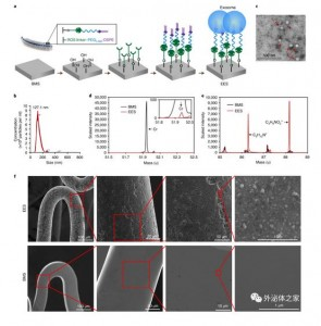Nat Biomed Eng:外泌体涂层支架用于缺血性损伤后的血管组织修复