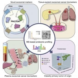 科学家开发了基于细胞外囊泡的蛋白质组学方法用于癌症的液体活检