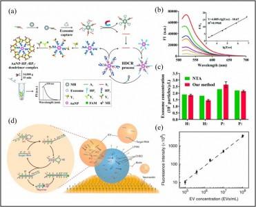 【综述】山东大学:纳米材料在外泌体的生物分析以及肿瘤治疗的研究进展