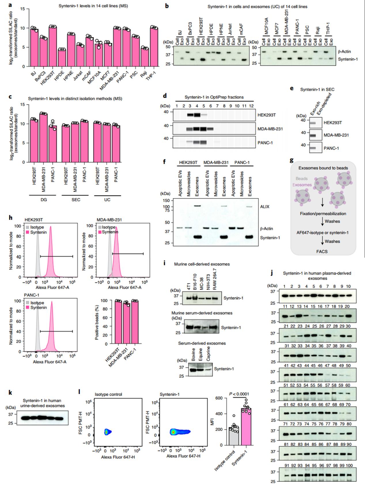【NCB】Kalluri团队利用定量蛋白质组学发现外泌体普遍富集和缺乏的蛋白质,其中Syntenin-1丰度最高可作为标志性蛋白