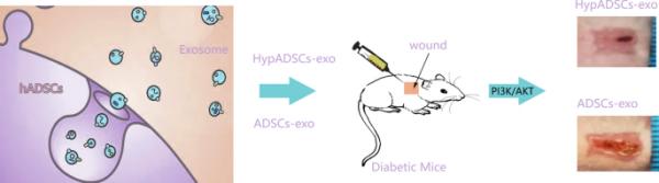 哈医大二院:乏氧脂肪干细胞衍生的外泌体促进糖尿病相关的伤口愈合