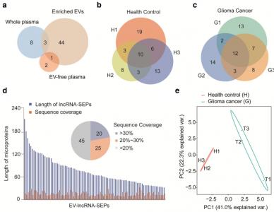 【JEV】中科院生物物理所:LncRNA编码的微蛋白——细胞外囊泡中的一种新形式货物