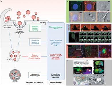 【综述】Nature Methods:成像在体内了解细胞外囊泡生物学的力量