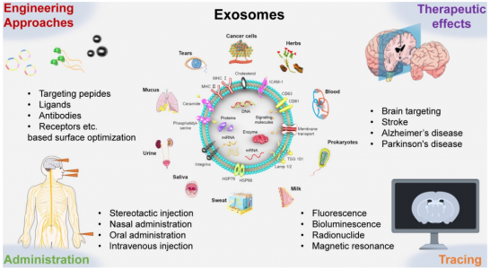 【综述】澳门大学:工程化外泌体用于脑血管和神经退行性疾病的治疗
