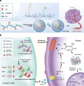 澳门大学:一种新的纳米单元用于逆转外泌体PD-L1的免疫抑制并增强肿瘤铁死亡